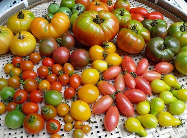 20190719-2019summertomatoes.jpg