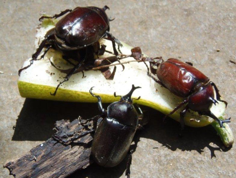 20190726-beetles.jpg