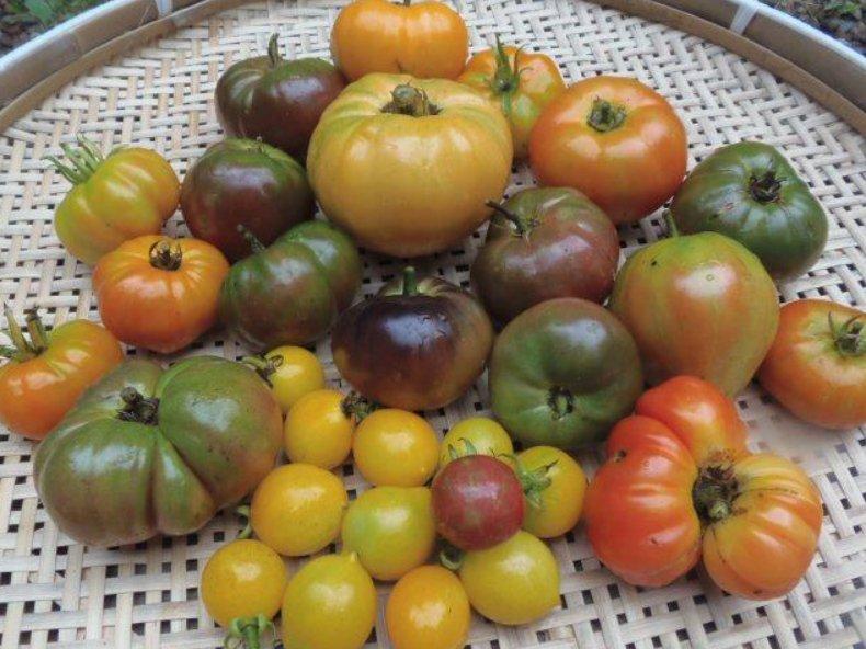 20190726-tomatoes.jpg