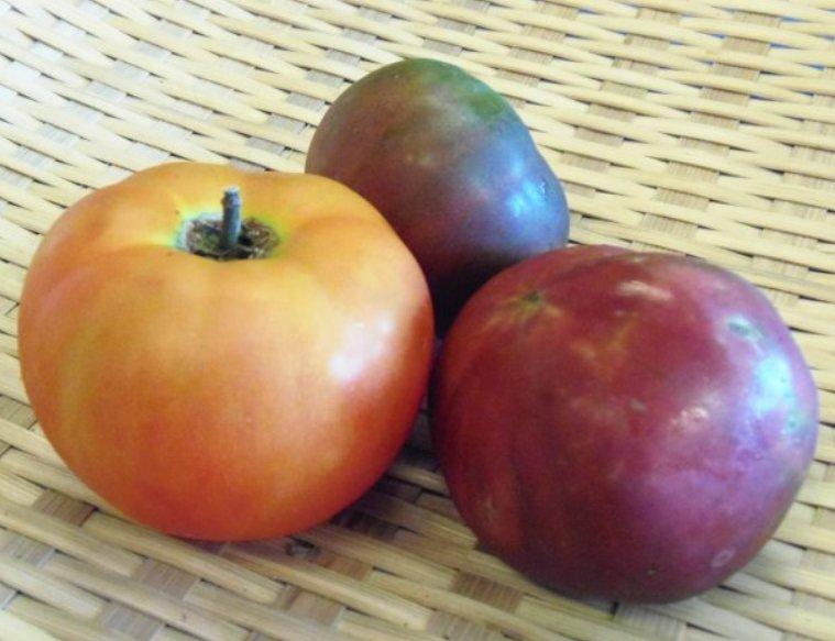 20190726-tomatoes26.jpg